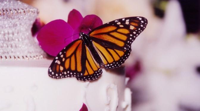 Mariposas en tu boda, suelta de mariposas